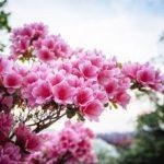 Festa della Mamma 2021, la ricorrenza tra fiori e iniziative
