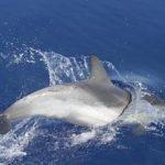 Troppo rumore in mare: è allarme per balene e delfini