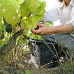 """Baldino (Cdp): """"La sfida è assicurare cibo a tutti riducendo impatti ambiente"""""""
